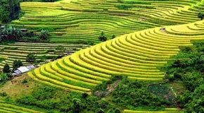 THE RICE TERRACE IN SAPA